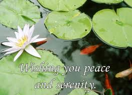 lilly serenity & peace wish