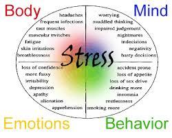 stress quads