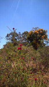 December wildflowers
